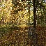 Thumbnail image for Pedelec Verleihstationen im Schwarzwald